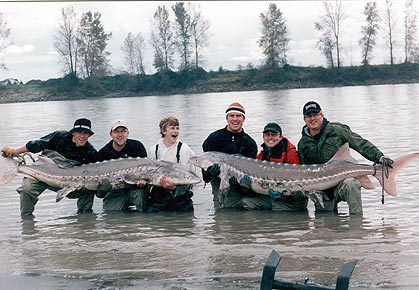 They are distinctive for their elongated bodies, lack of scales, and occasional great size: Sturgeons ranging from 7–12 feet (2-3½ m) in length are common, and some species grow up to 18 feet (5.5 m).