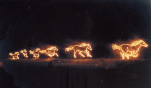 44-wild-horses-103
